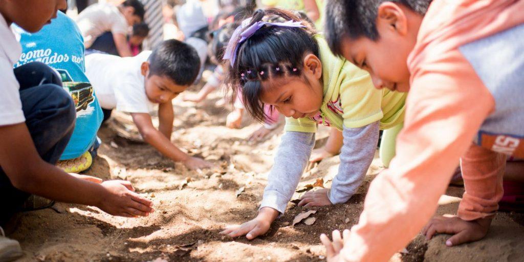 Todos Santos garden planting